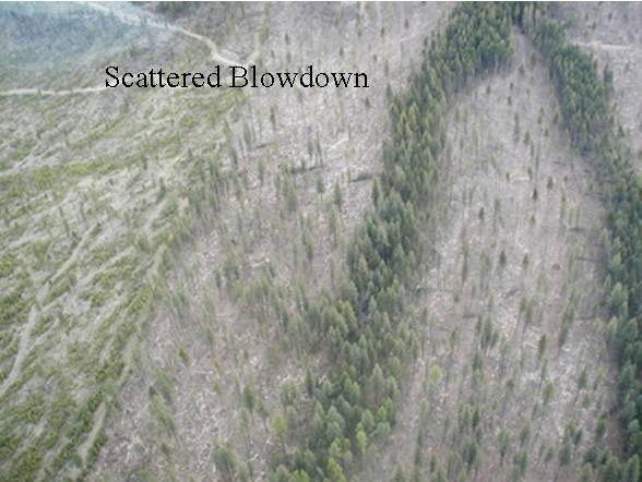 sct  blowdown  2 sm.jpg