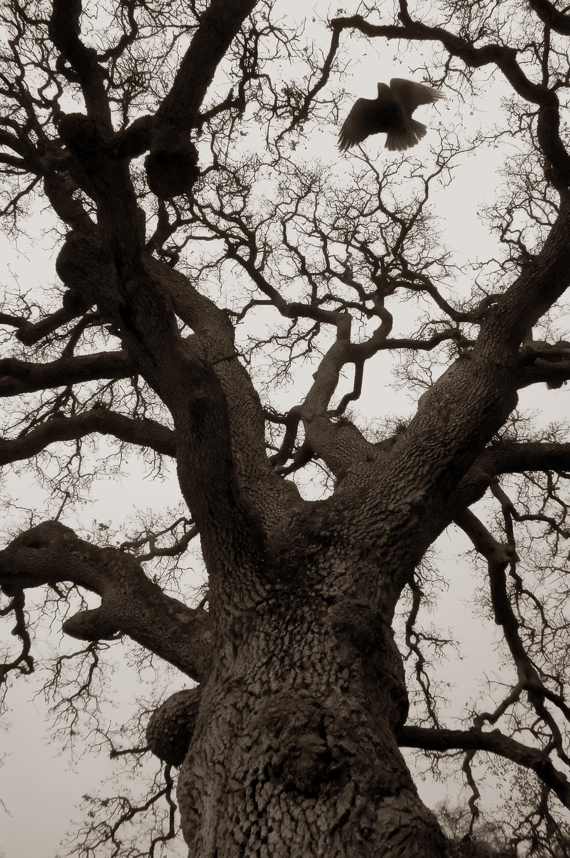 treehawk.jpg