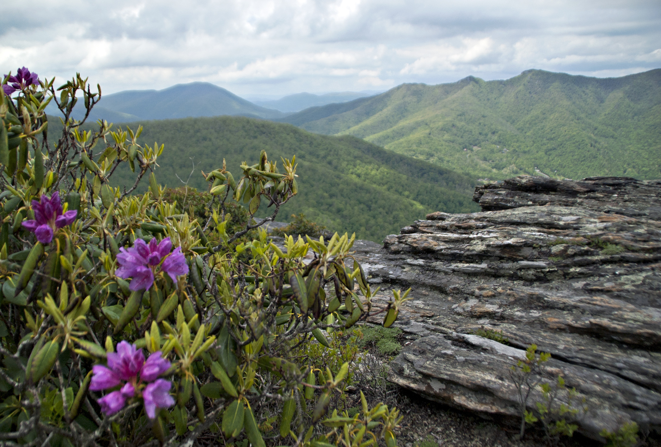 perkins rock rhodo.jpg