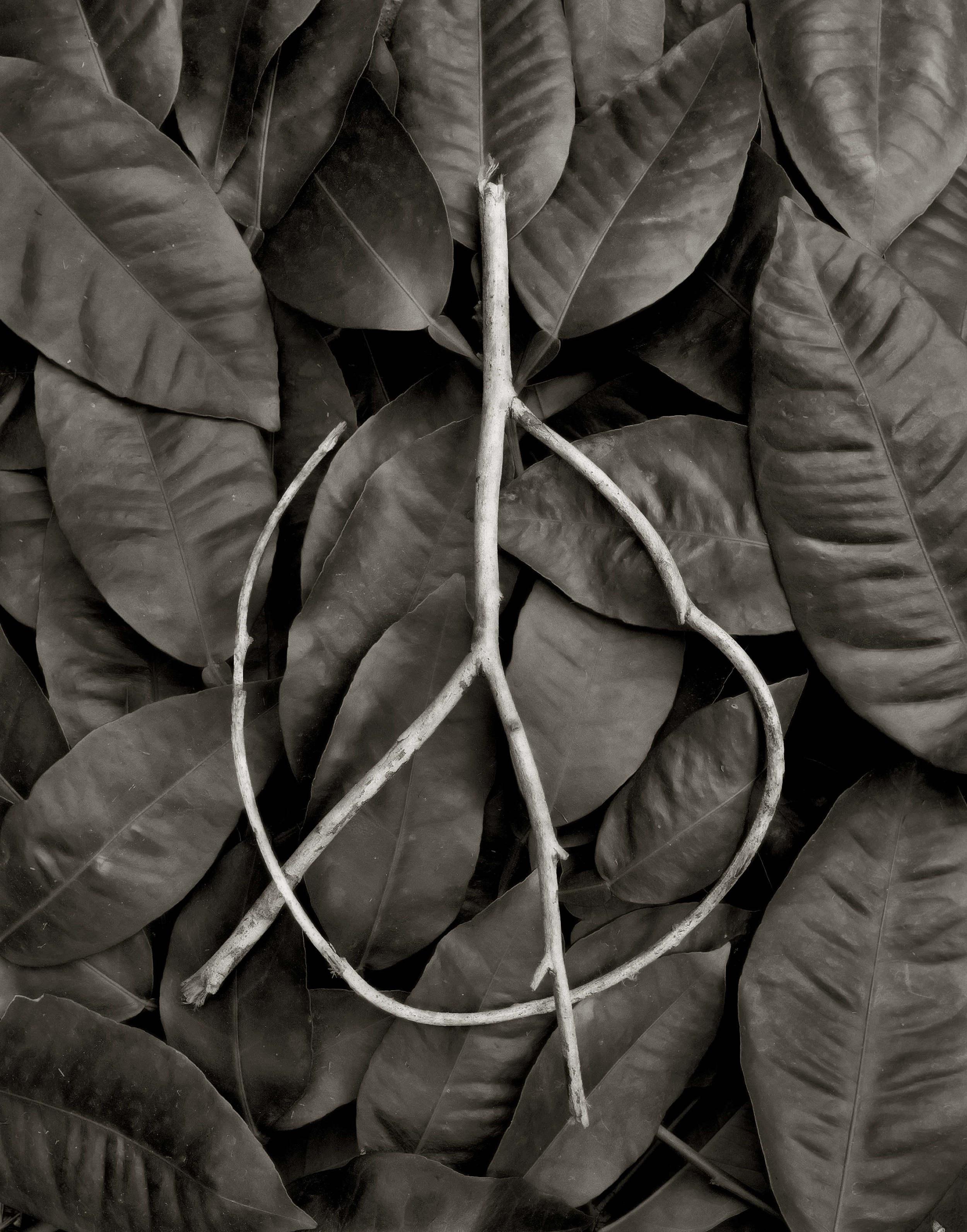Peace Twig.jpg