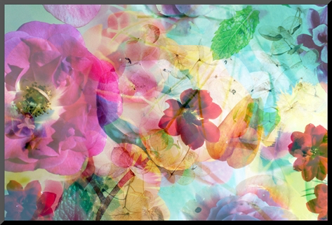 Abstract dreamy multicolor blossoms in water, alaya gadeh