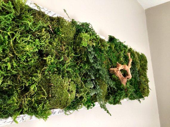 Living Moss wall