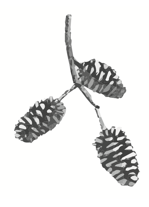 Fabicon Image  made in Illustrator using a hand drawn image of an Alder cone.