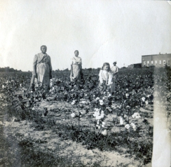 Granddaughter Georgia Watson in the cotton field with the Woodfolk family,c. 1911.