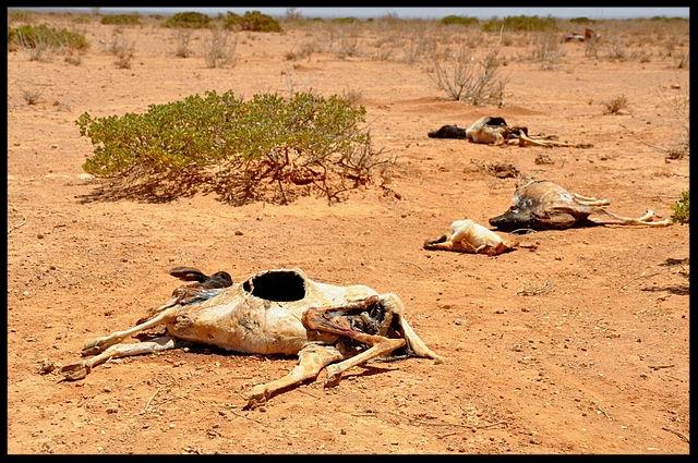640px-2011_Horn_of_Africa_famine_Oxfam_01.jpg