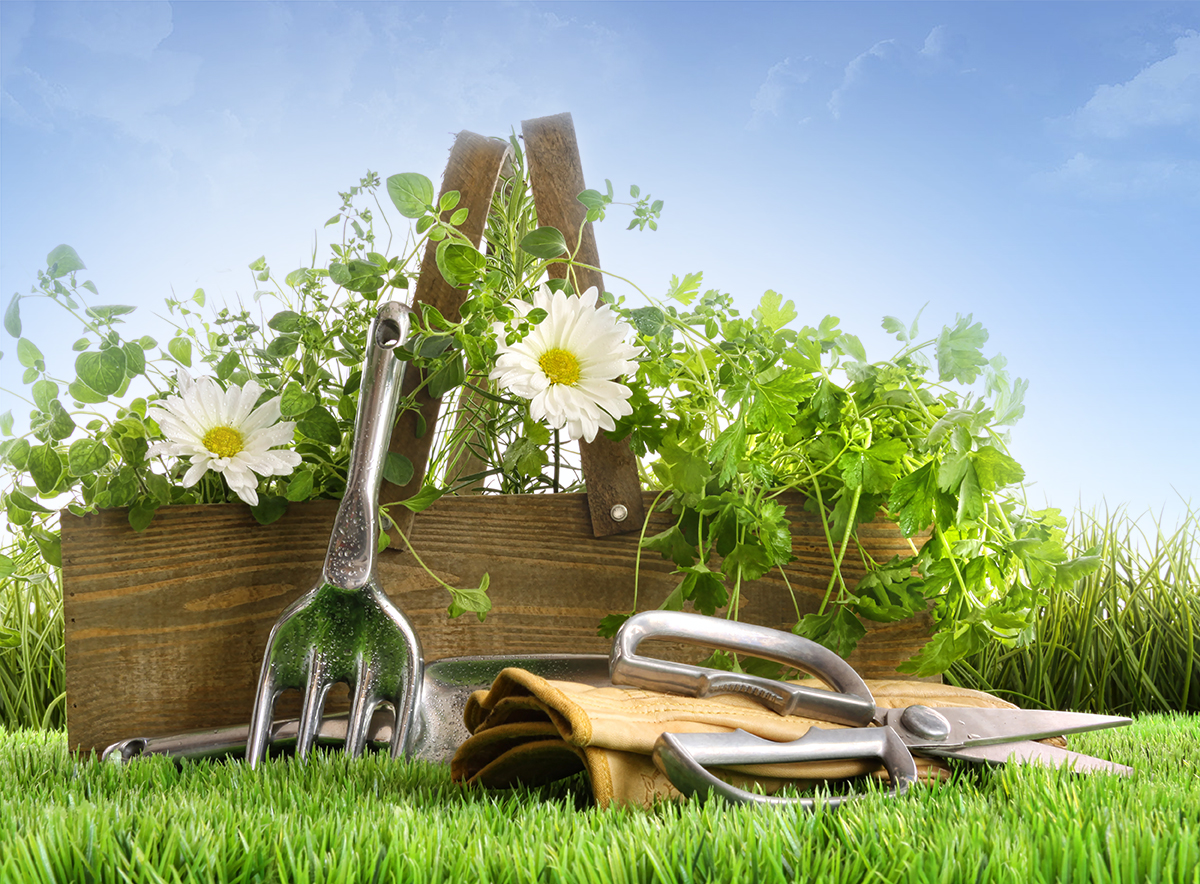 Need tools to assist you in your gardening?