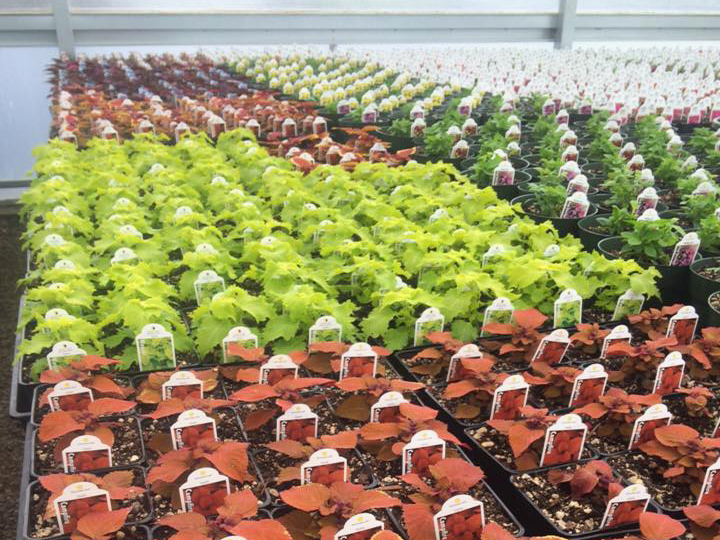 Find out more about our large plant selection!