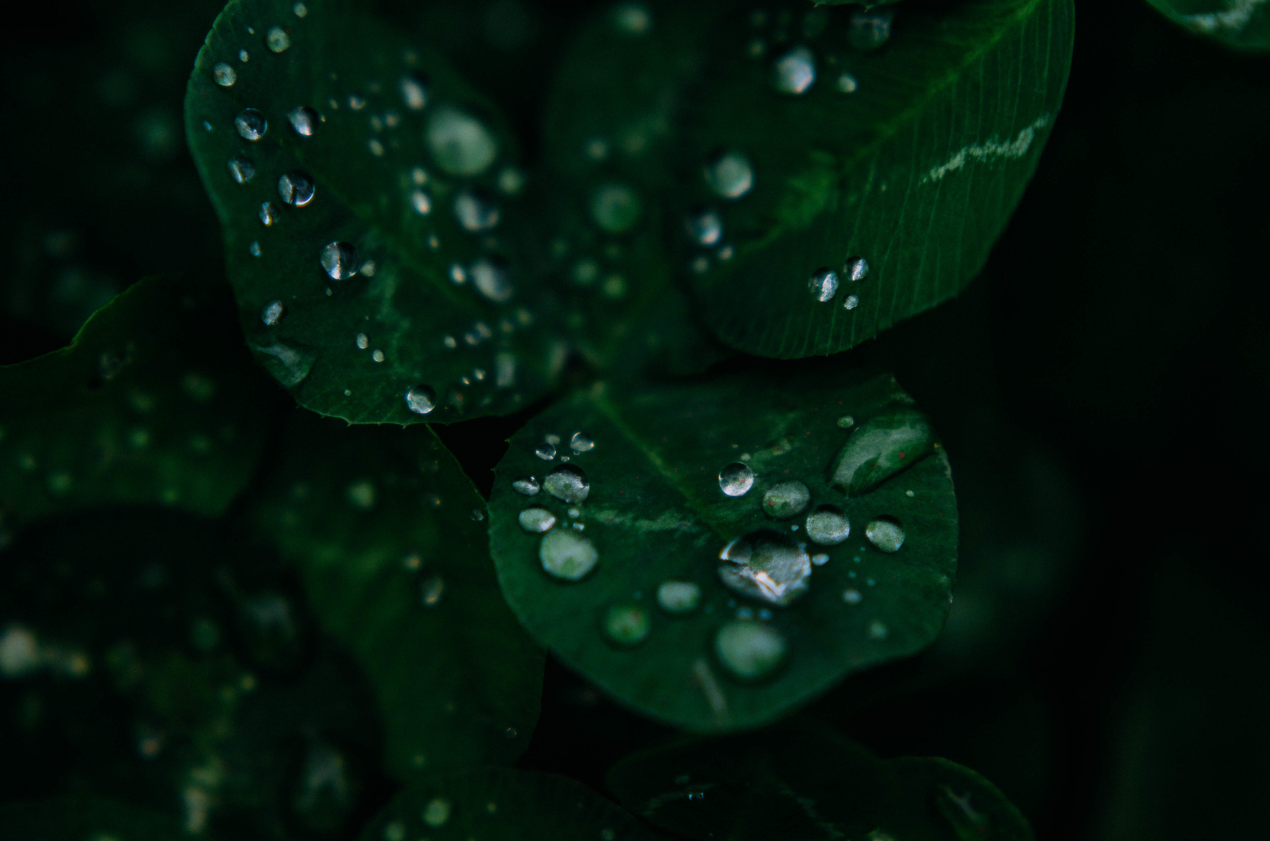 samantha whitford photography atx phototgrapher texas nature water droplets (1).jpg