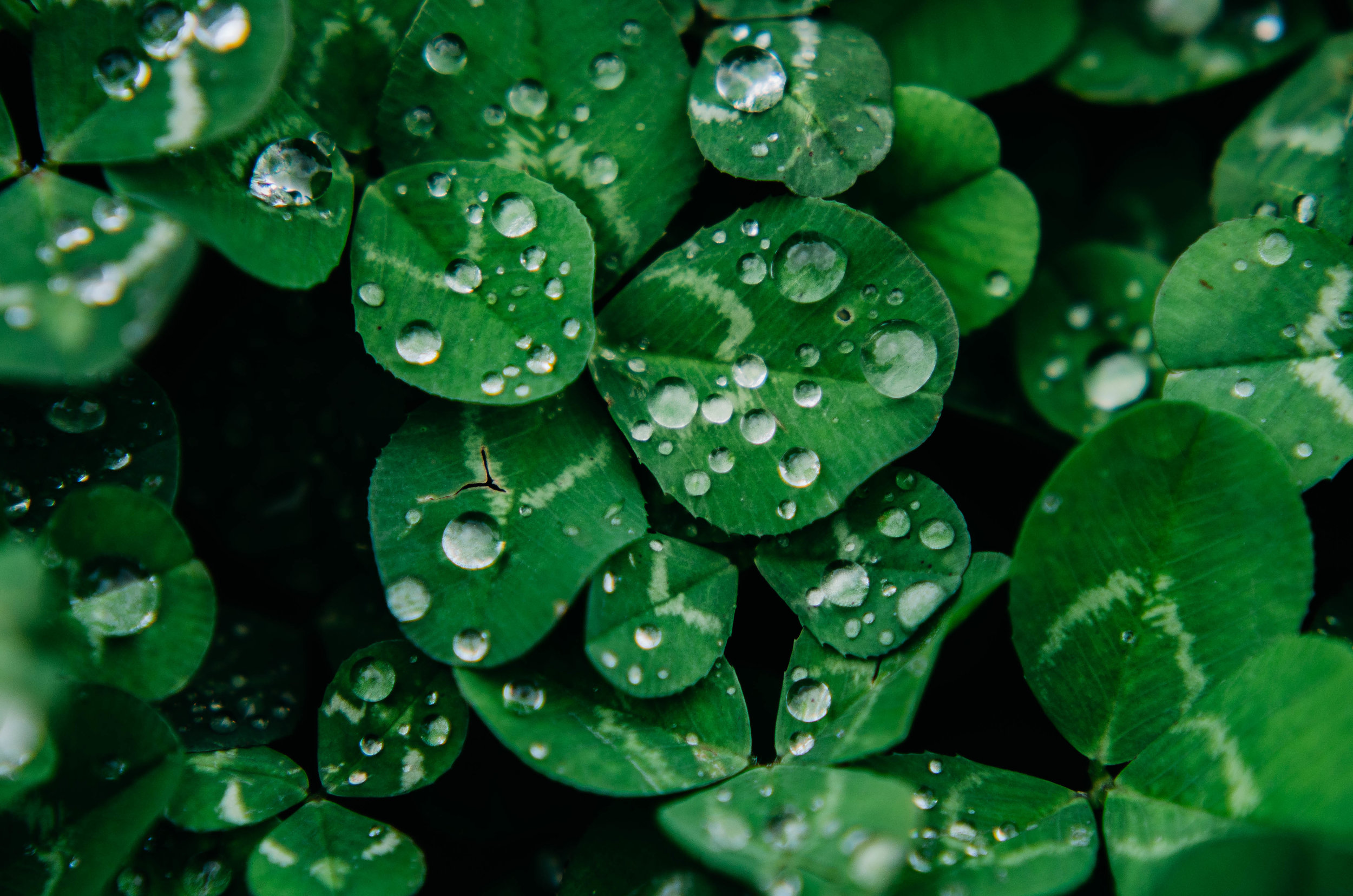 samantha whitford photography atx phototgrapher texas nature water droplets (13).jpg