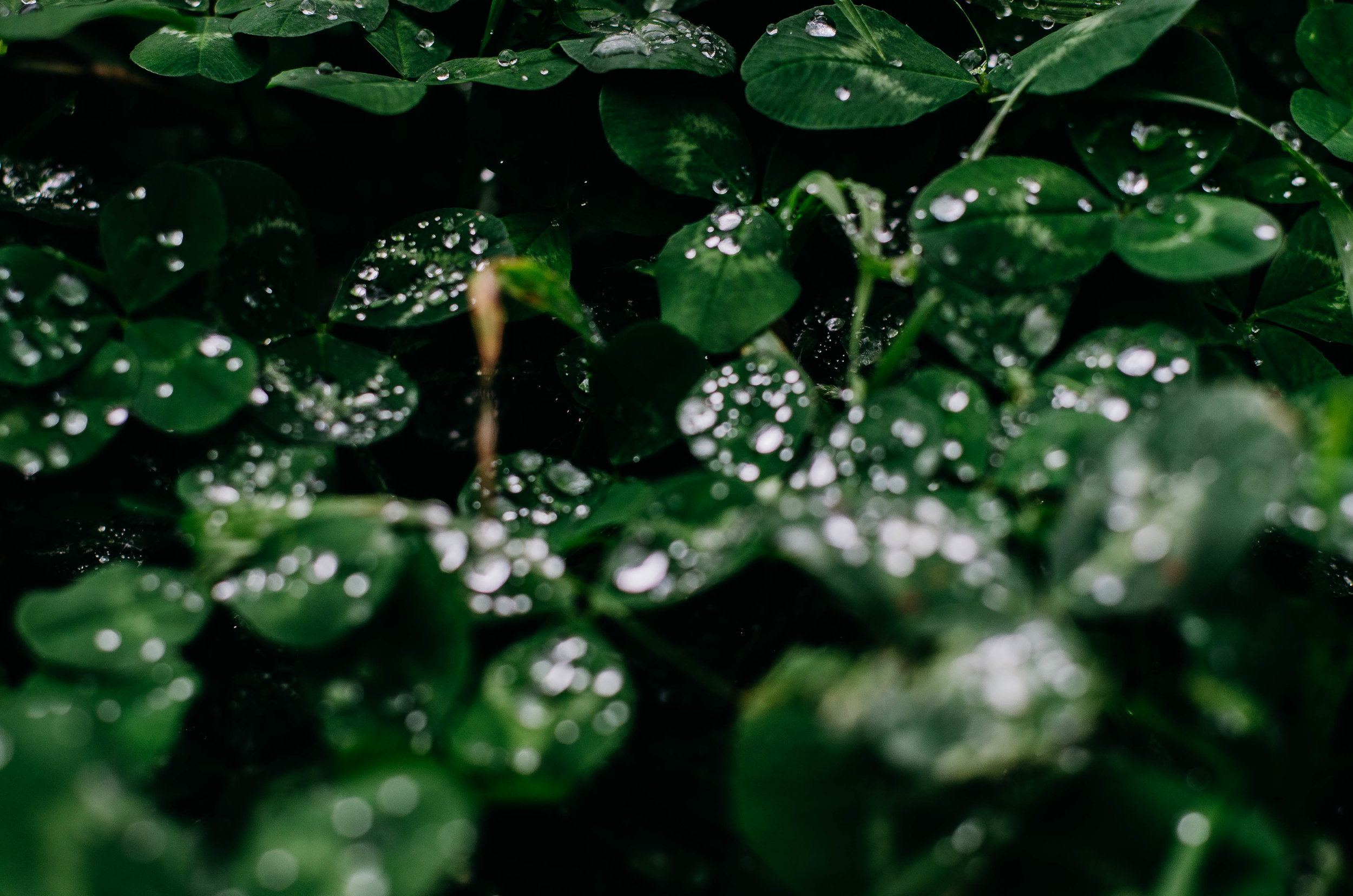 samantha whitford photography atx phototgrapher texas nature water droplets (15).jpg