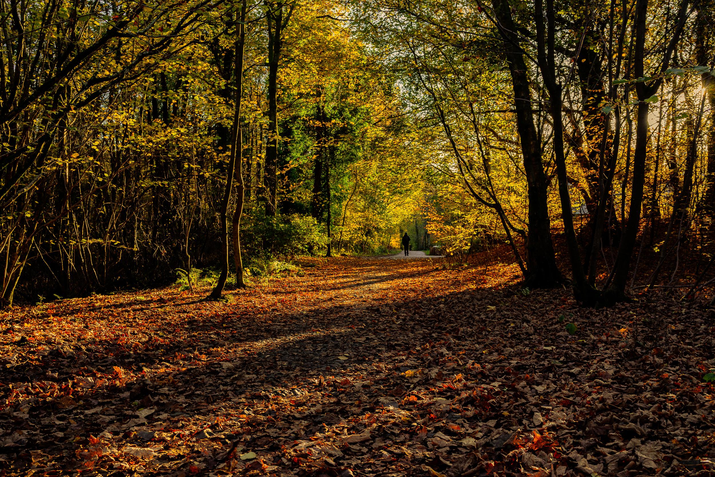 lakes autumn walk (1 of 1).jpg