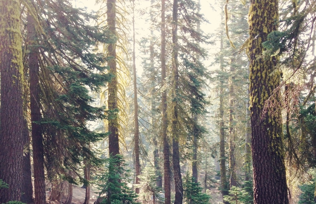 tall trees-self love-fearless-peace-how to face your fears
