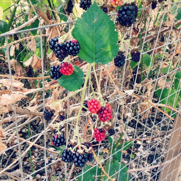 blackberries-self love-patience-self love-spirtual entrepreneur