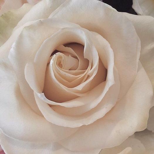Yin-yoga-rose.jpeg