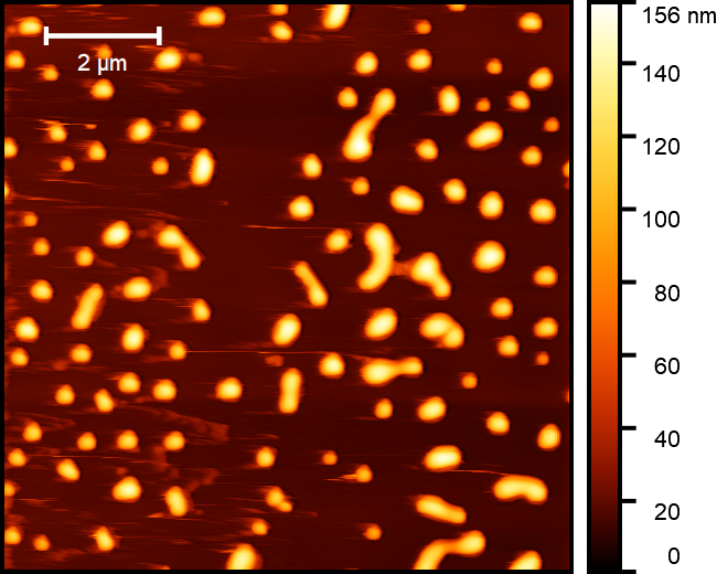 AFM height image of double cross-linked hyaluronic acid nanoparticles before isolation by dialysis.