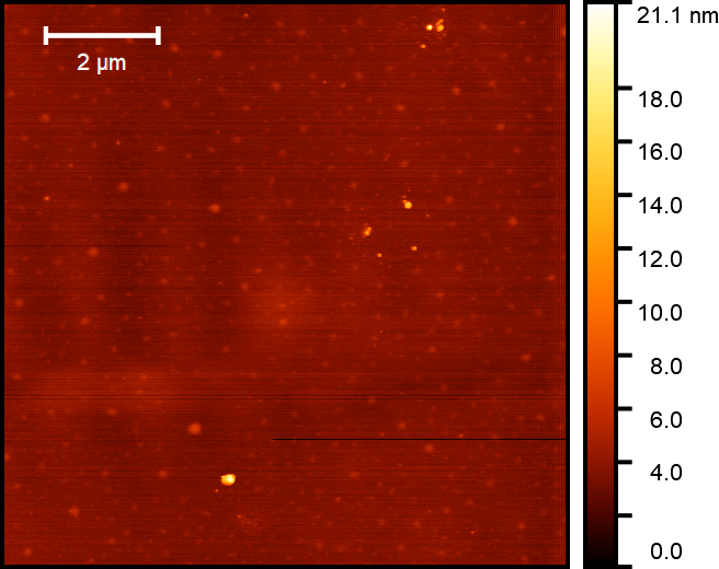 AFM height image of double cross-linked hyaluronic acid nanoparticles after isolation by dialysis.