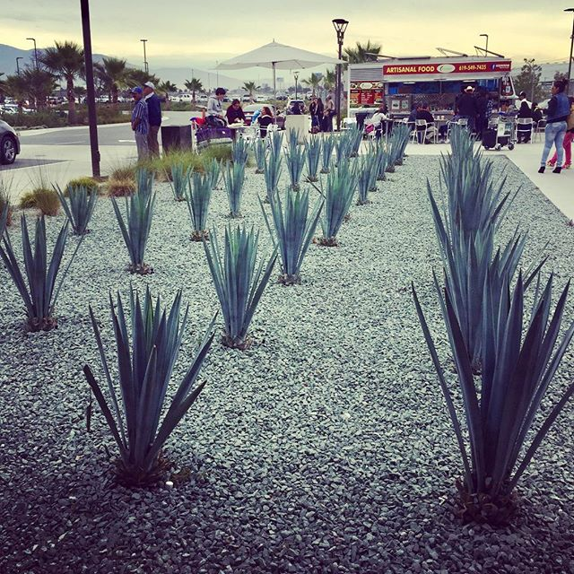 Off we go!! The first stop on our trip is the CBX terminal to walk from California to the Tijuana airport. Mmm tacos. 🌮 • #travel #birthdaymonth #birthday #mexico #tijiuana #tijuanamexico #crossingtheborder #agave #tequila #tacos #margaritas #travelmore #getoutside #mexicotrip #southoftheborder #cbx #sandiego #encinitas
