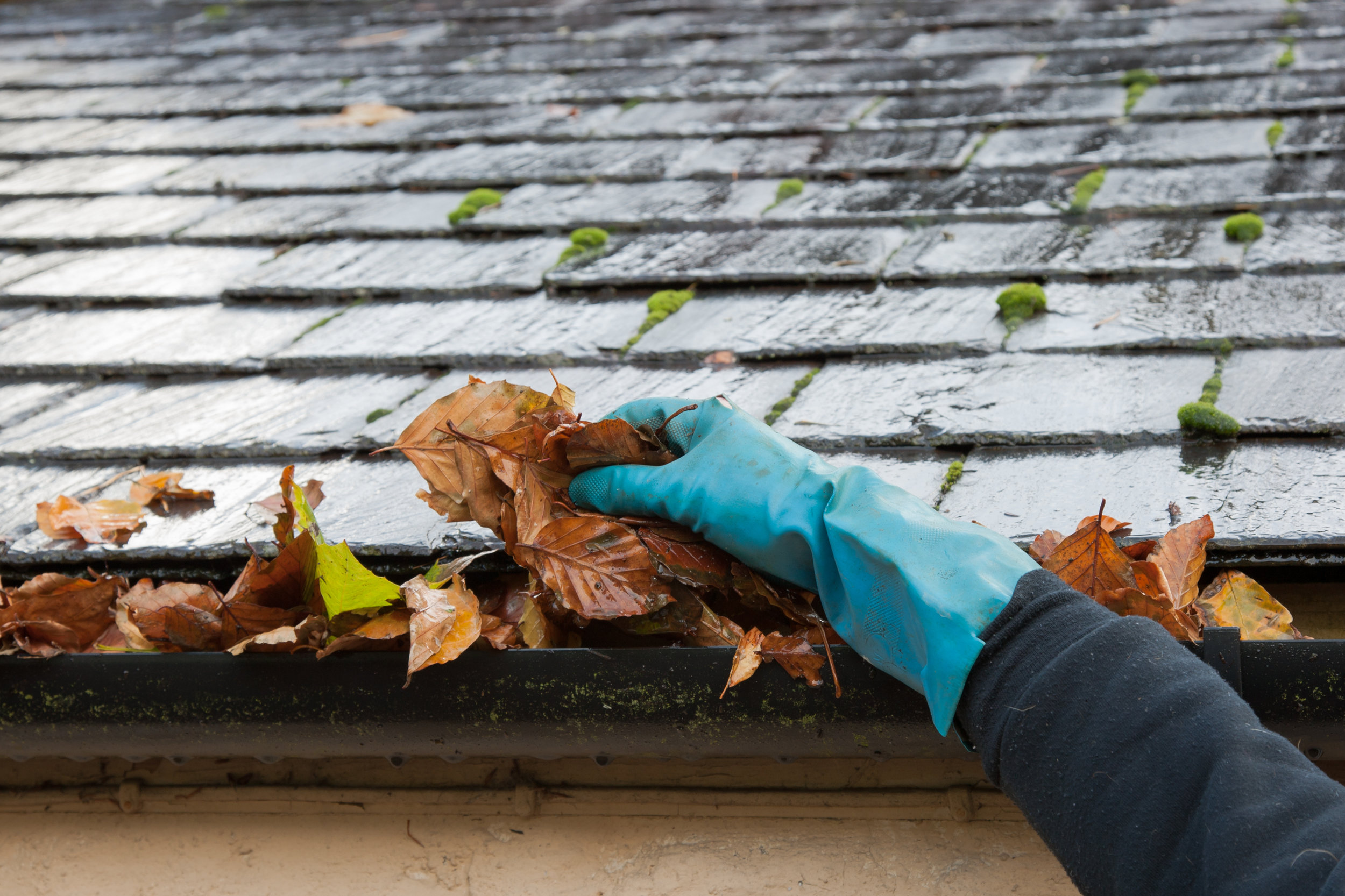 Gutter Cleaning - We have been cleaning out guttering since we started, we do so efficiently and with minimal mess. We remove all debris, wash out guttering and then clean exterior guttering as part of the service.Part of our cleaning process includes our new GutterSucker™ vacuum that helps get everything out of your gutters, up to 3 storeys, especially in hard to reach places.