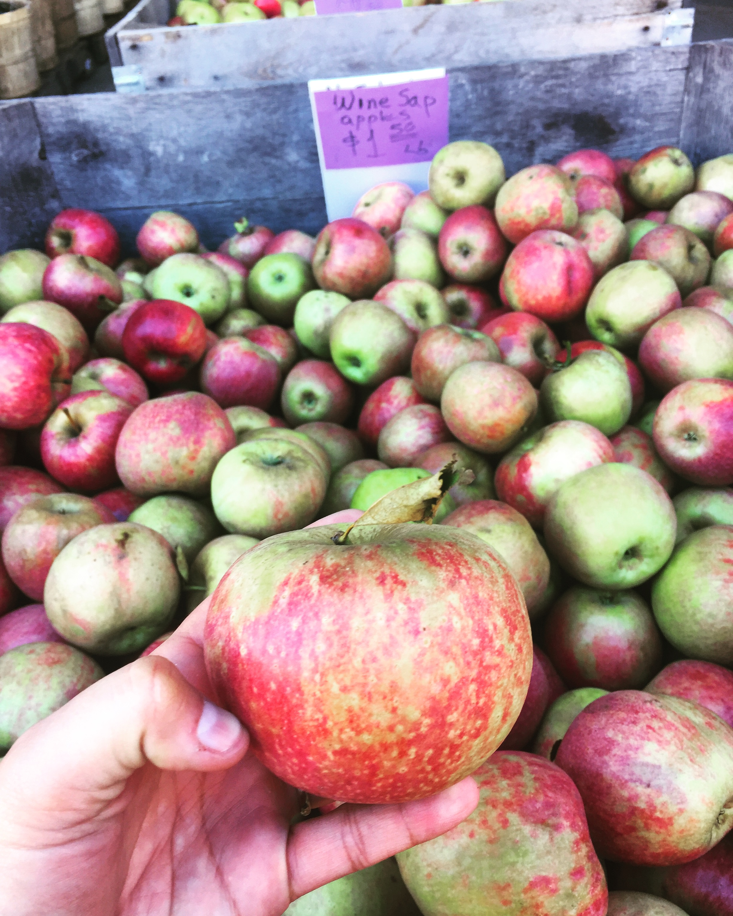 Our fav apple of the season, the Winesap from Smiley's Farm