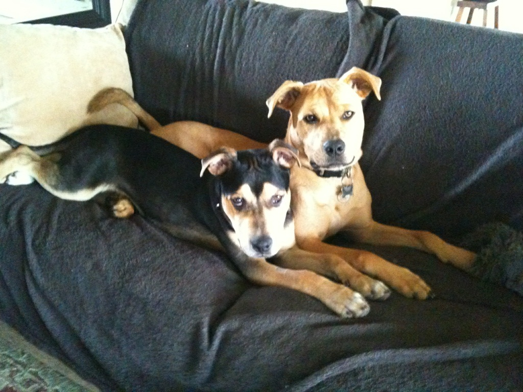 Zara (the Blond) and Benji (Black) in younger days