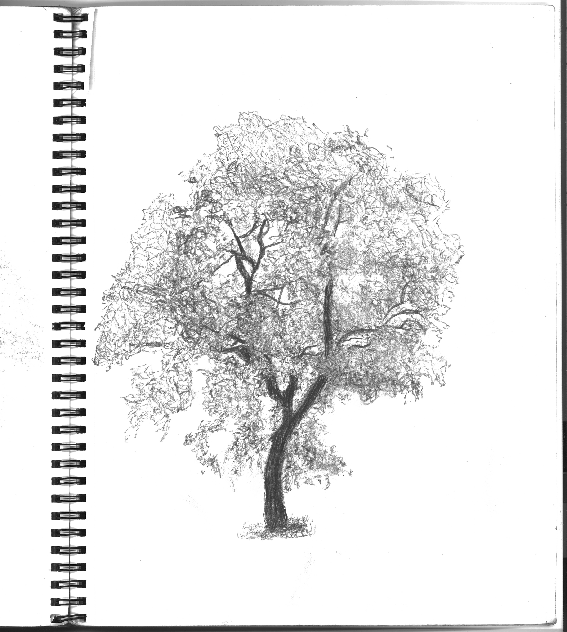 Tree Ink Pencil Joshua Beard Art