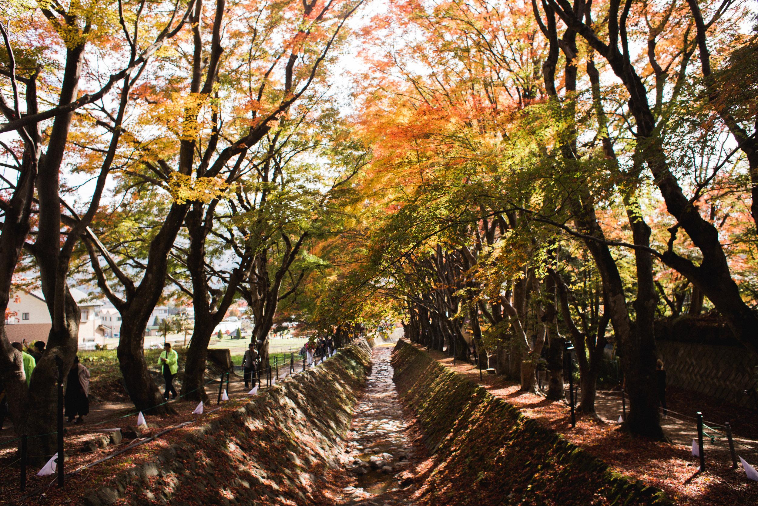 Kawaguchiko-42.jpg