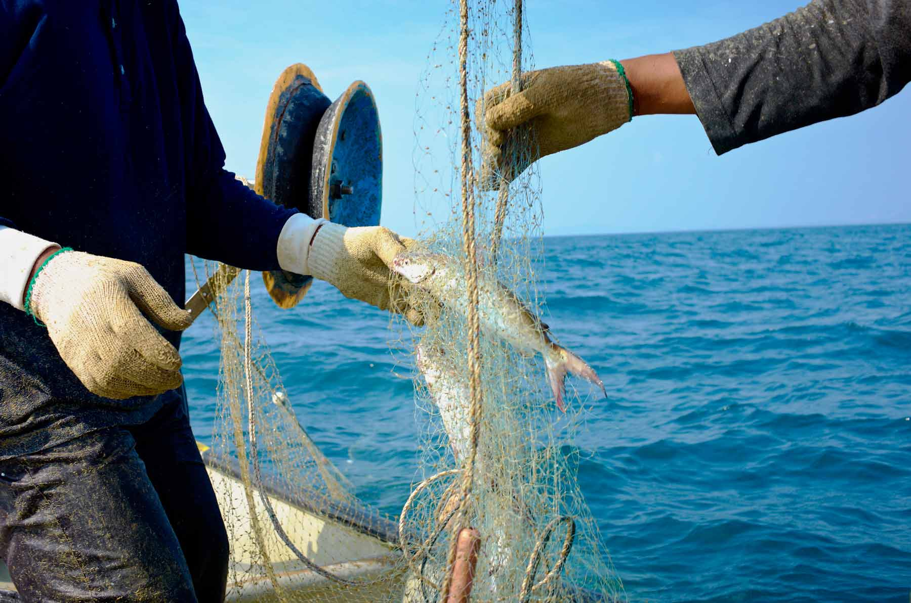 Taking the fish out of the nets