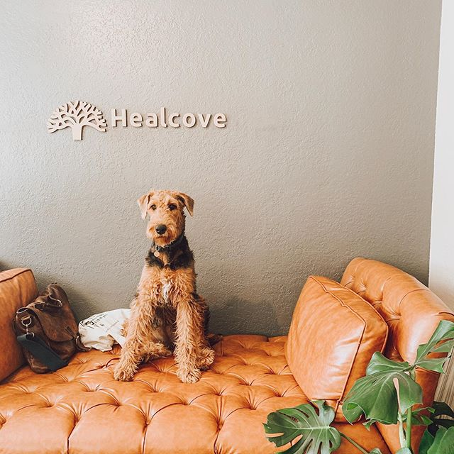 Did you know that there's a new addition to our team? Meet Ocean, the resident therapy-dog-in-training at Healcove. She likes naps, treats, and belly rubs. -  #healcoveclinic #wellnesswednesday #chiropractor #acupuncture #massage #mentalwellness #strengthtraining #physicaltherapy #naturopathicmedicine #sandiegochiropractor #therapydogsofinstagram #selfcare #sandiegoyoga #airedalesofinstagram #airedaleterrier #airedalecommunity #wellness #fitness #liveinspired #mindbodysoul #raiseyourvibrations #wellnessjourney