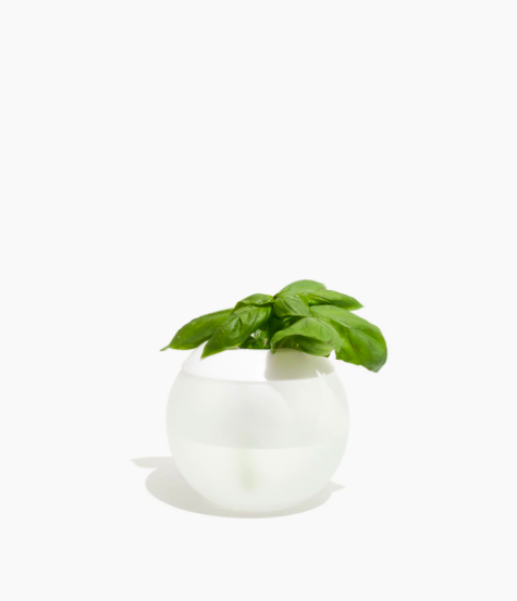 W&P / HYDROPOD HYDROPONIC GARDENING SET $25 - available at Madewell