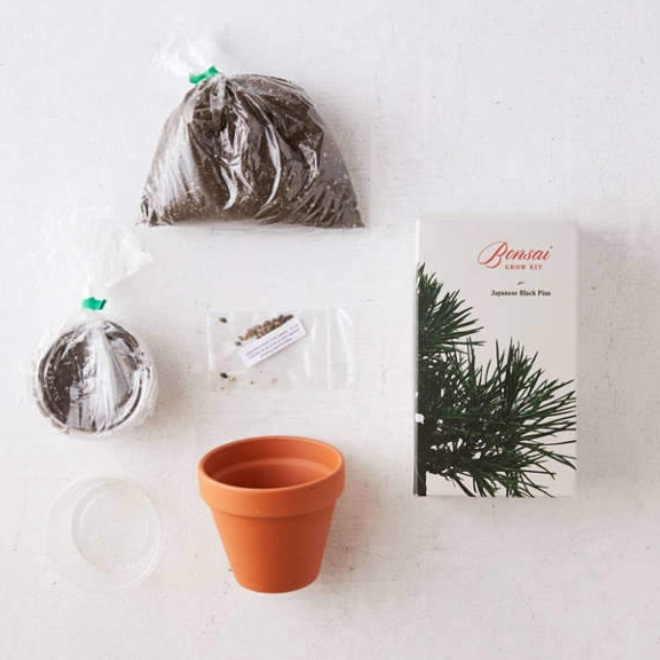 URBAN OUTFITTERS / BONSAI GROW KIT $16 -