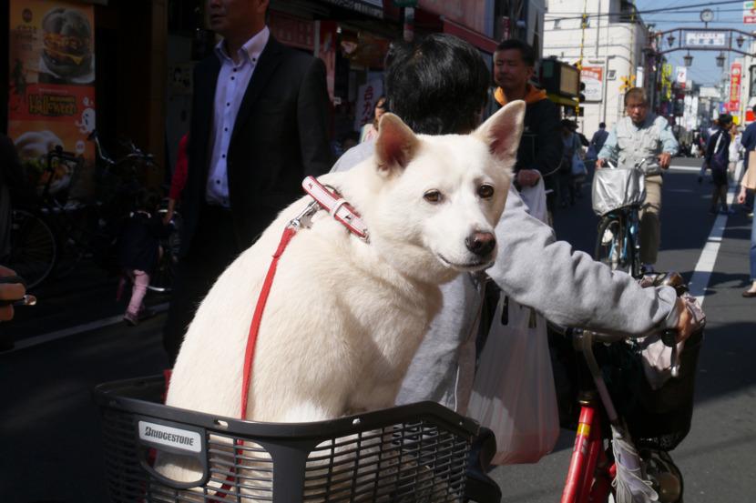 Tokyo dog   //  DNAMAG