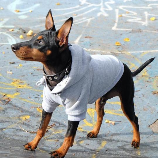 Pet Haus grey hoodie via @shopgoodboy