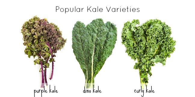 kale-varieties.jpg