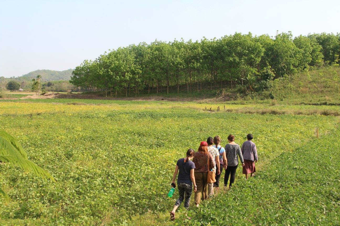 CIEE Khon Kaen students tour the soy bean fields to learn about villagers' way of life and the contamination from the gold mine.