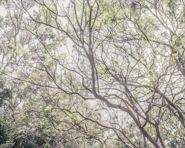 bangalore-thomas-van-den-driessche-2188.jpg