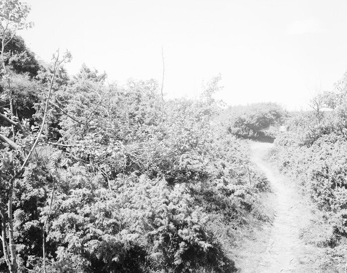 077bushesbranches.jpg
