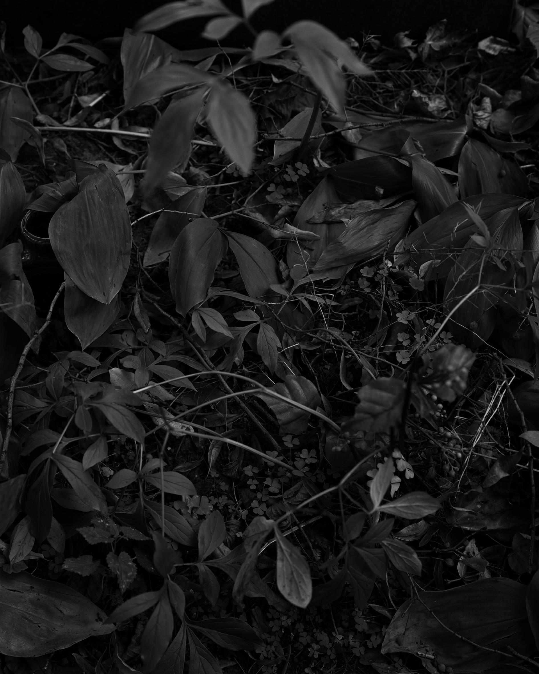 Planter, Vasily Smyslovs grav.jpg