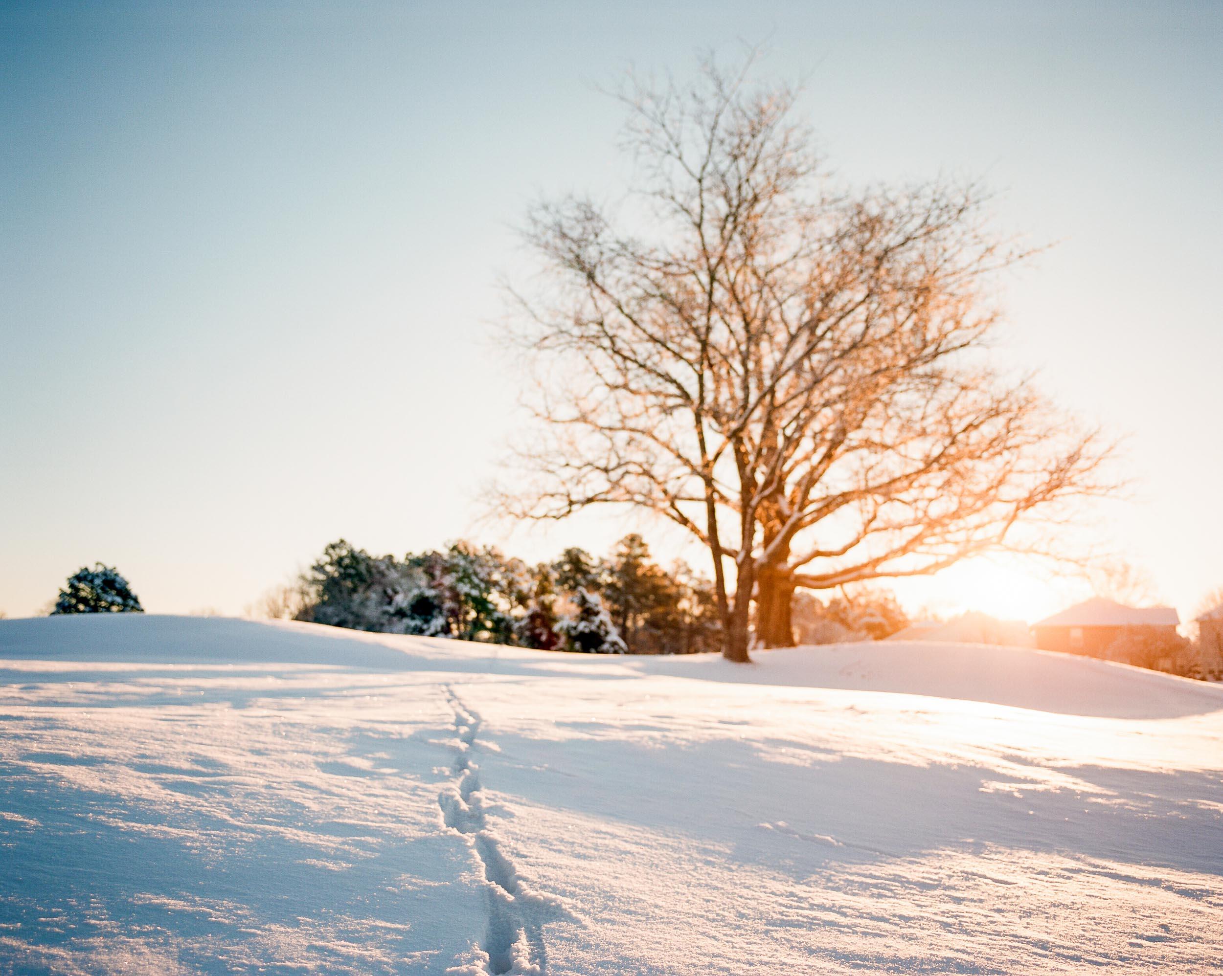 Fresh Blanket of Snow in Raleigh, NC ■ Pentax 67 ■ Kodak Portra 160