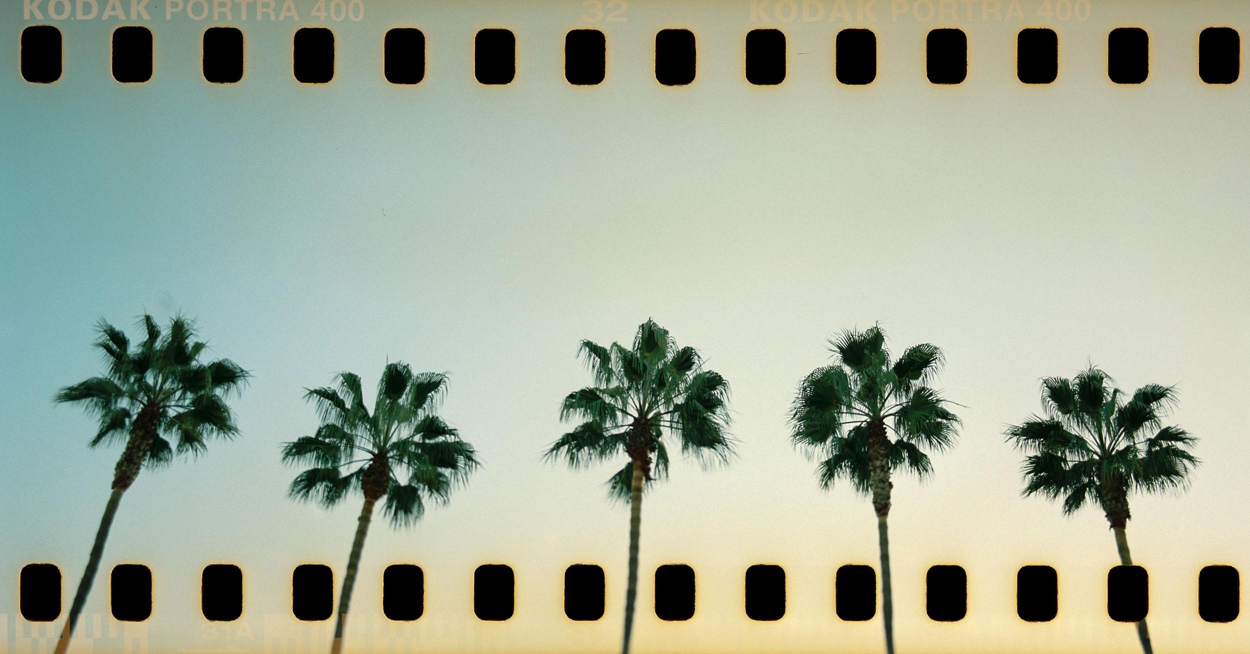 Palm Trees Pentax 67 35mm panorama