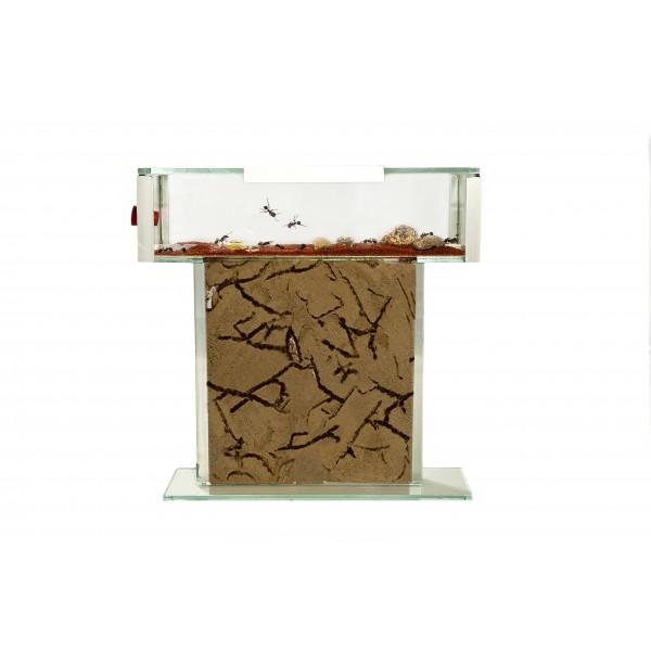 anthouse-t-kit-glass-15x15x15-.jpg