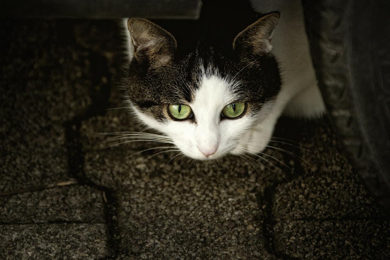 cat-207583_1280.jpg