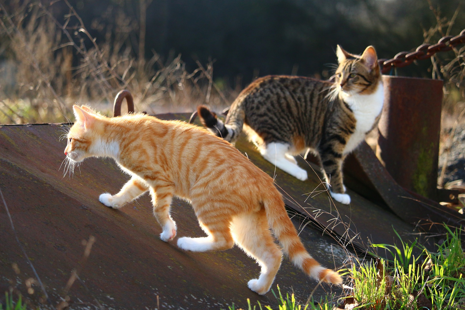 cat-1183095_1920.jpg