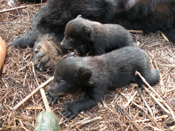Cubs_la.jpg