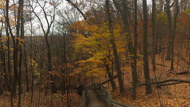 Sanctuary Woods.jpg