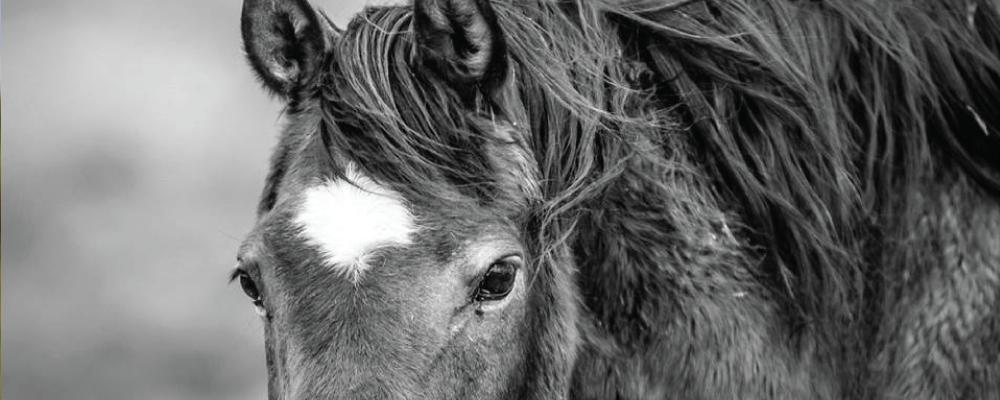 Integrative Equestrian Services    In Boulder County, Colorado    Learn More