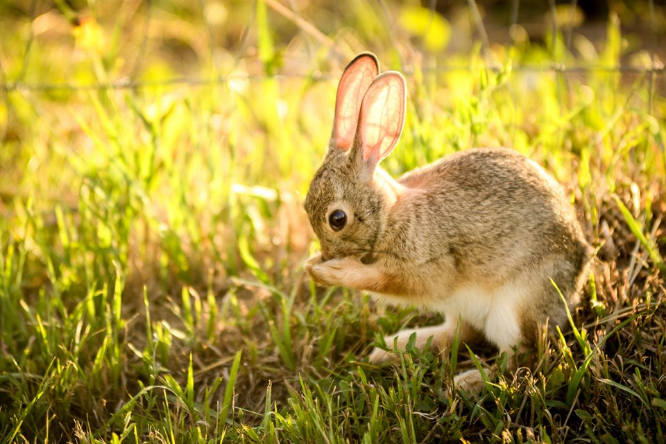 Haven Hills Bunny.jpg