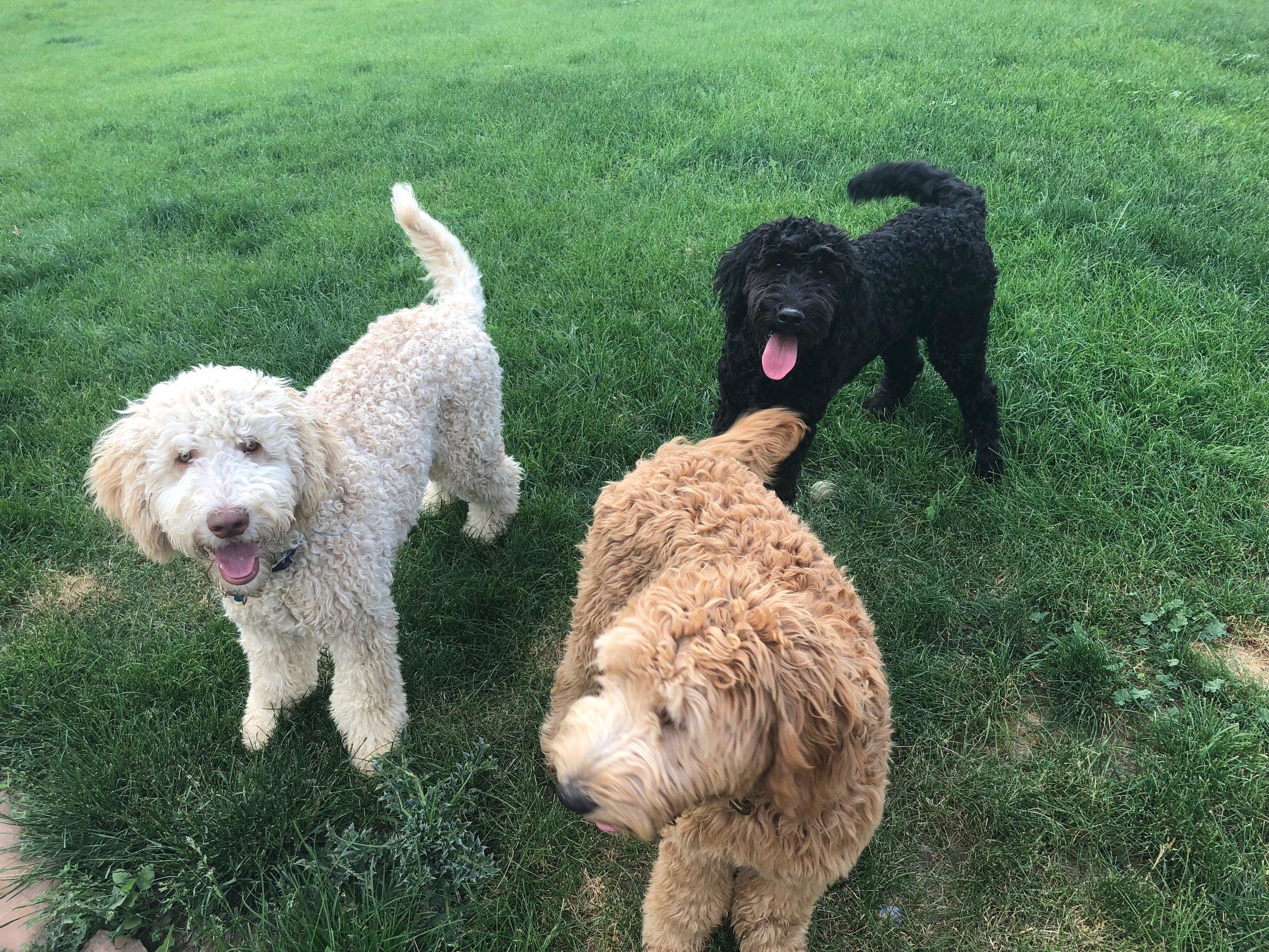 Albus,Callie,Newt.JPG