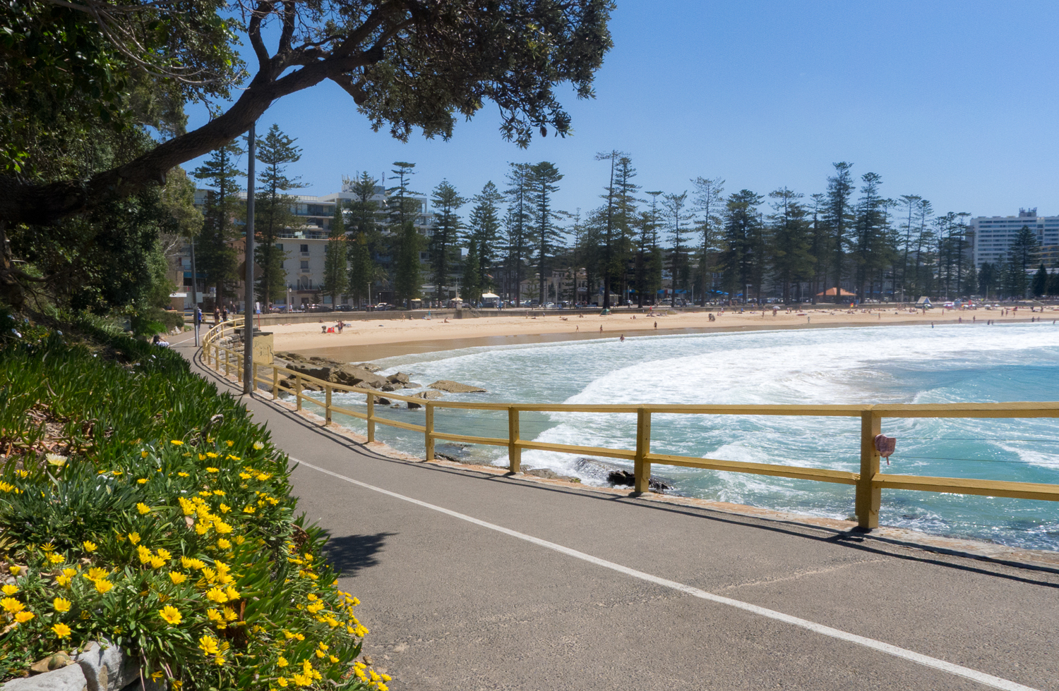 Between Manly and Shelly beaches