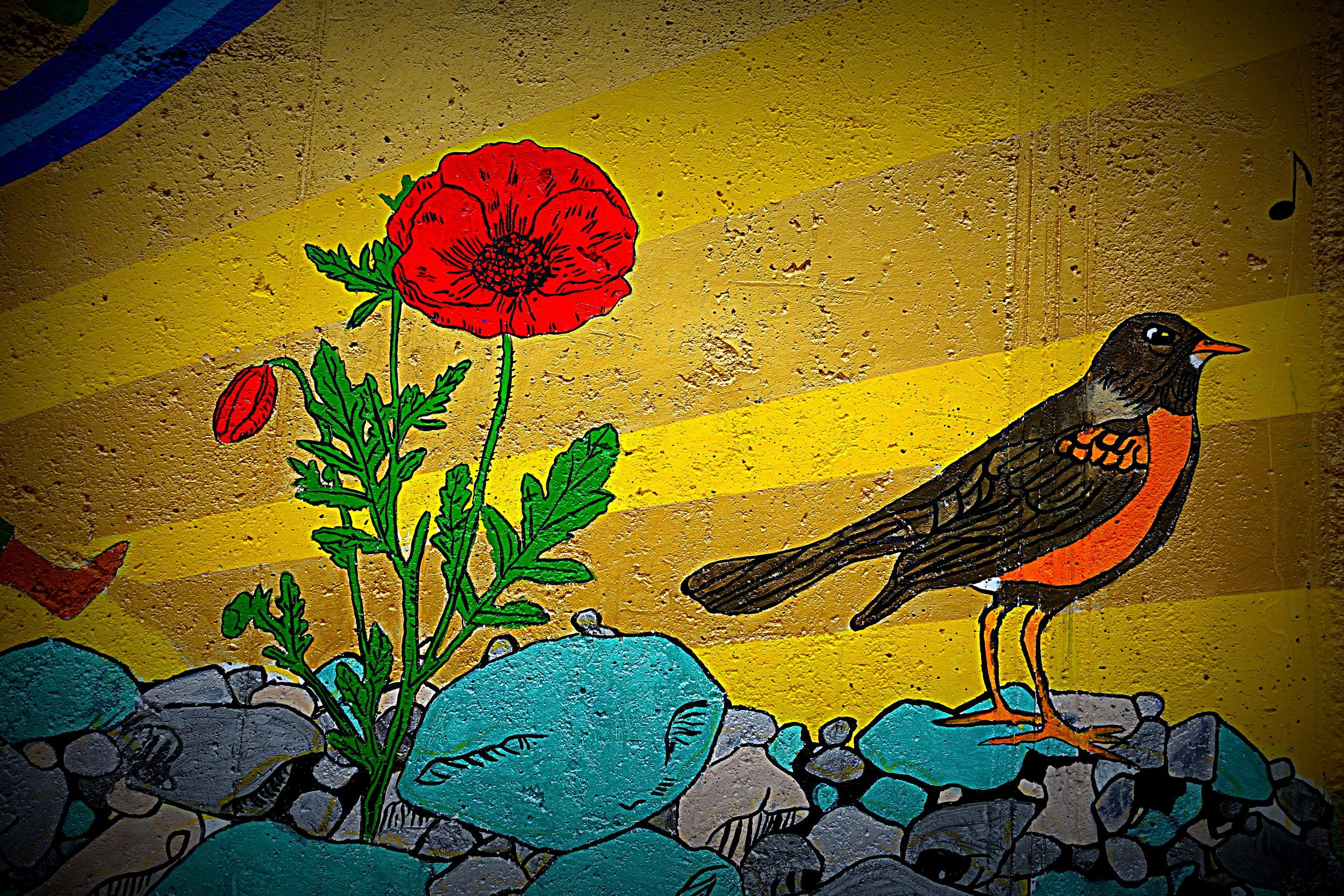 Poppy_Robin.jpg