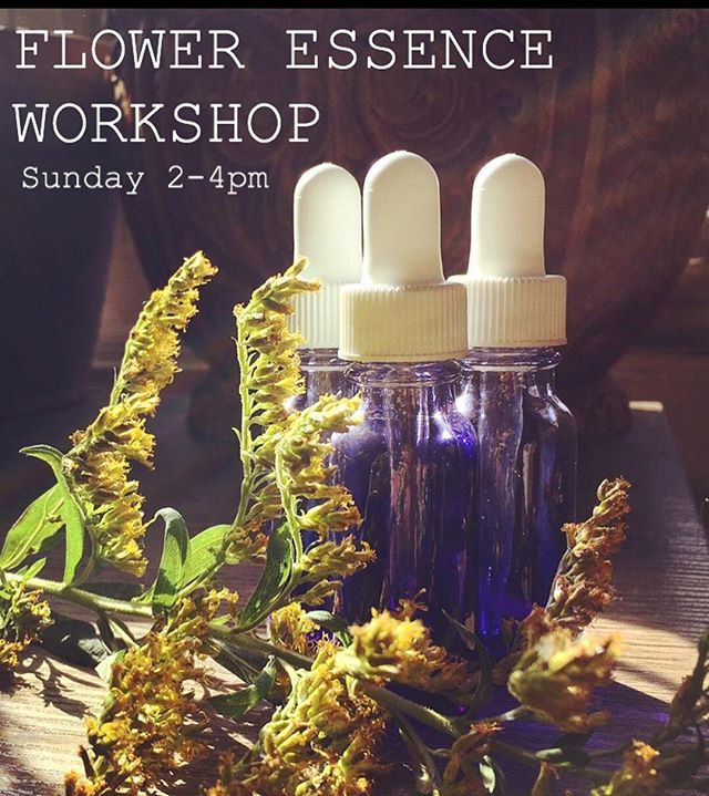 If you missed this topic at the Plant Connection Course, I'm teaching it again this Sunday! Flower essences have become one of the greatest forms of plant medicine for me, and by far the most transformational. 🌿🌿🌿🌿🌿🌿🌿🌿🌿🌿 We'll learn how to make your own essence, how to choose the right essence, and ways in which they help our subconscious programming/thought & emotional patterns shift to a higher vibration💓💓💓💓 🌿🌿🌿🌿🌿🌿🌿🌿🌿🌿 Link in bio to register! 🌿🌿🌿🌿🌿🌿🌿🌿🌿 Location: @themaesalon 🌿🌿🌿🌿🌿🌿🌿🌿🌿 #gowiththeFLŌ